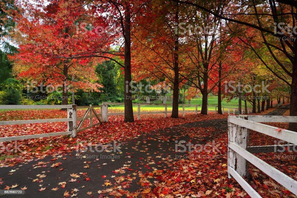 Autumn laneway rural countryside stock photo