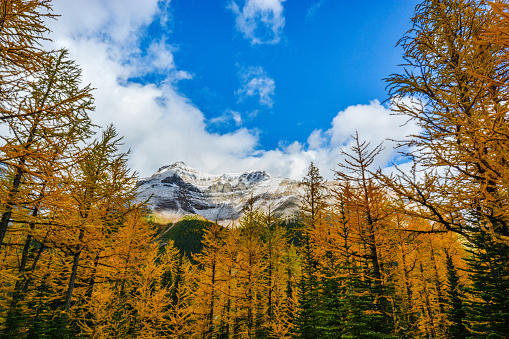 View of Paradise Valley from backcountry trail, Banff National Park.