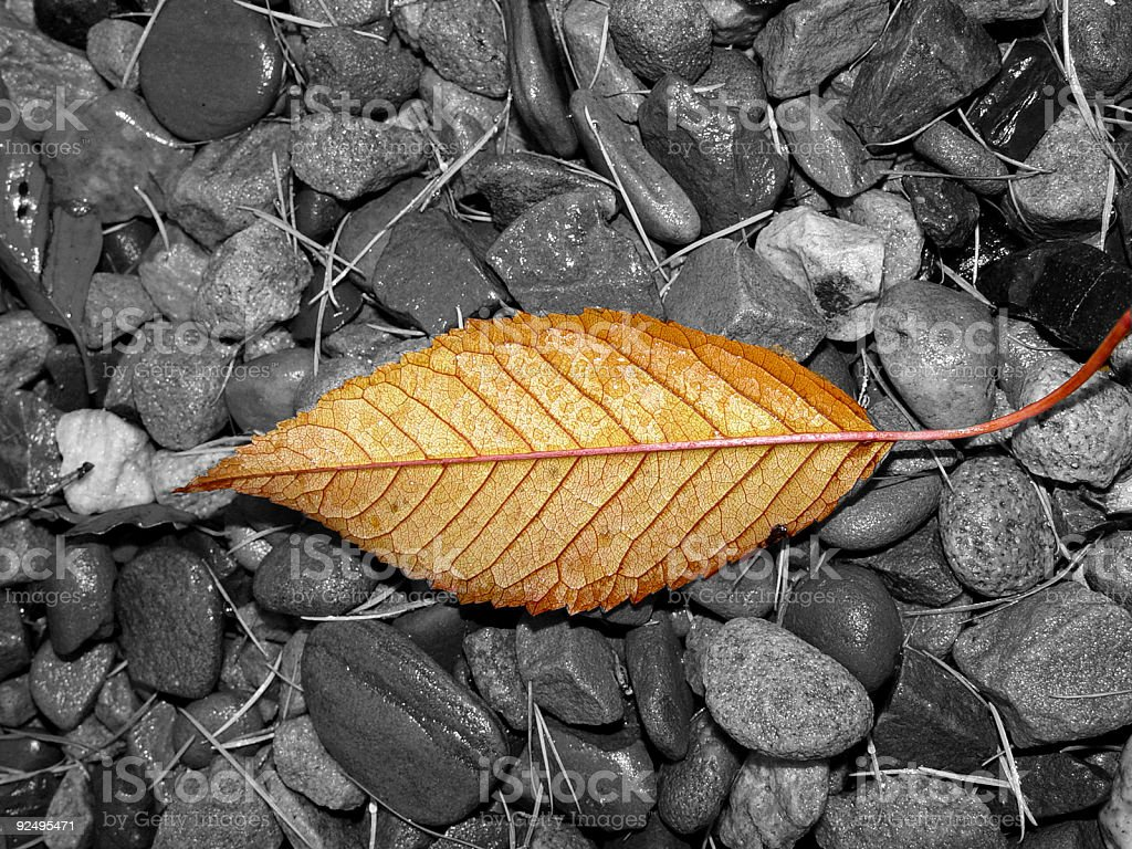 Autumn leaf and wet stones royalty-free stock photo