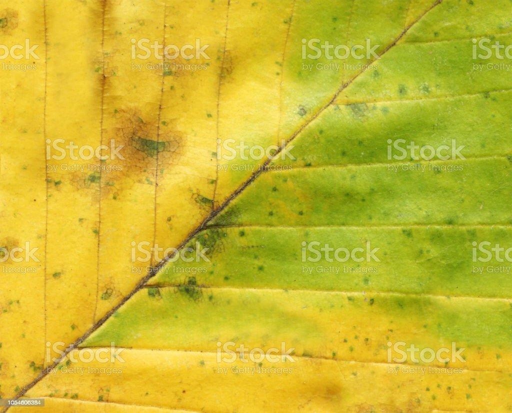 Autumn leaf background close up stock photo
