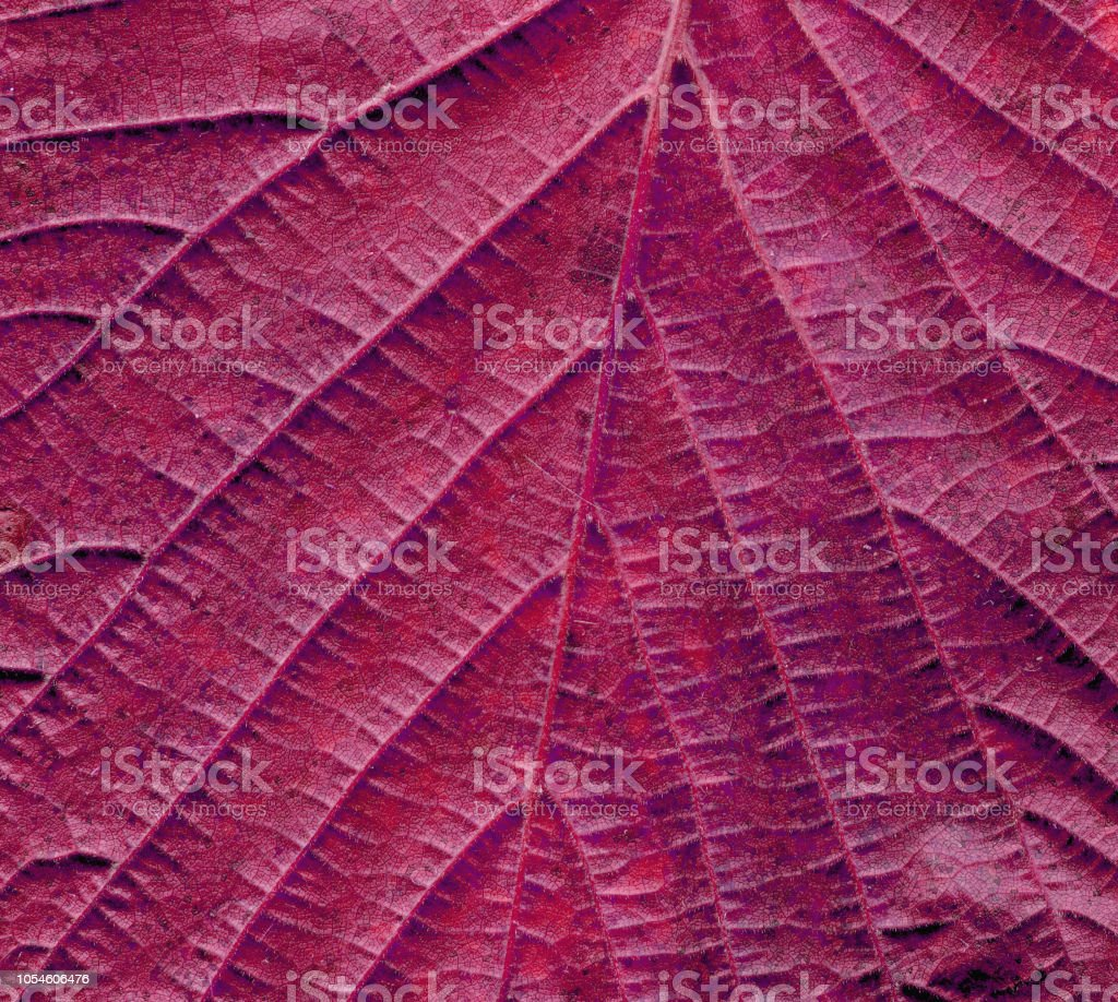 Autumn leaf background close up. Red leaf texture stock photo