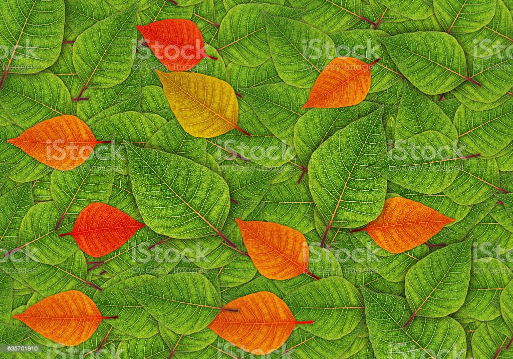 Autumn leaf background. royalty-free stock photo