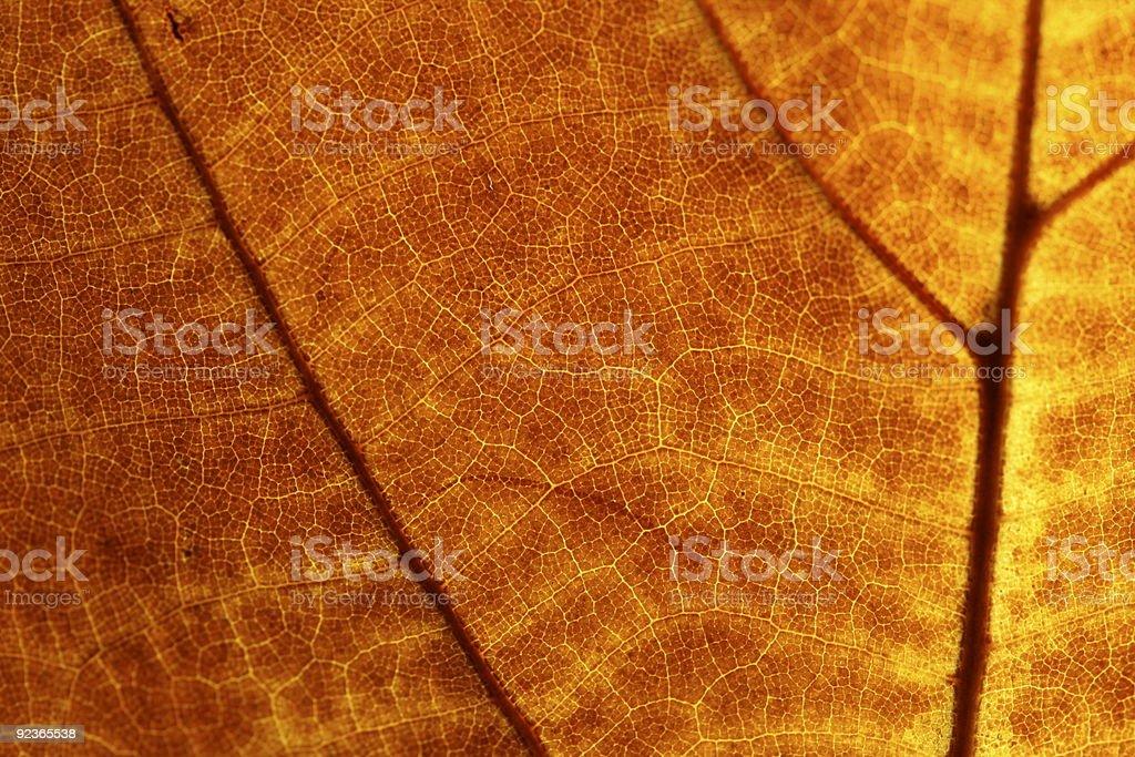 Autumn leaf background royalty-free stock photo