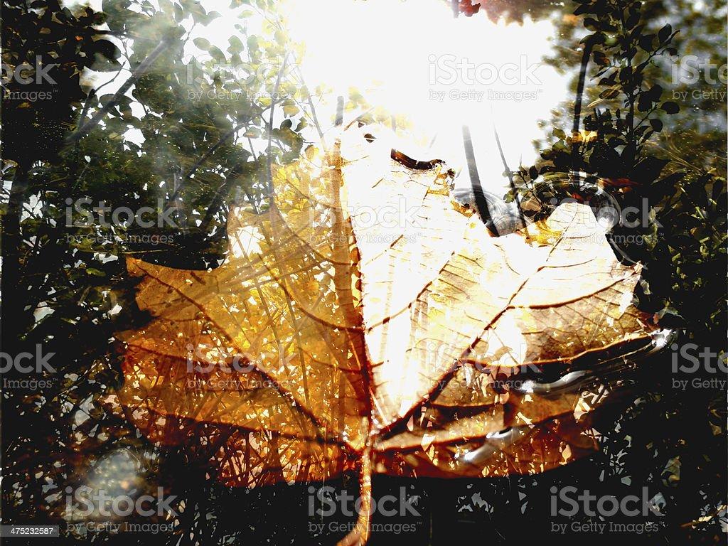 Autumn Leaf Blend royalty-free stock photo