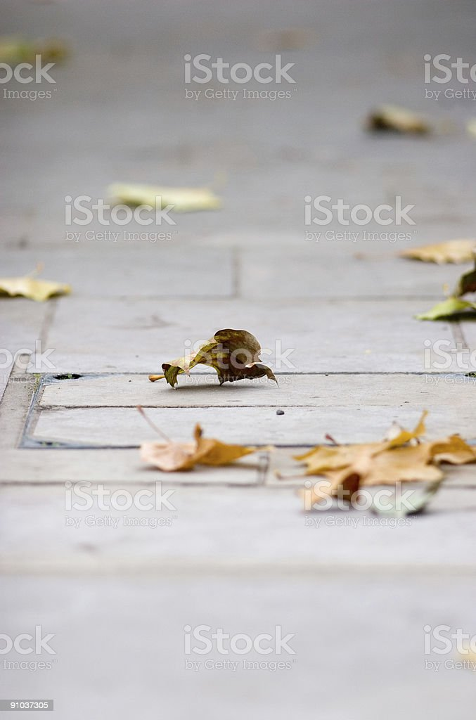 Autumn leaf blowing royalty-free stock photo