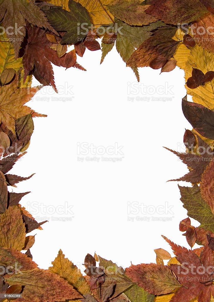 Autumn Leaf border isolated on white royalty-free stock photo