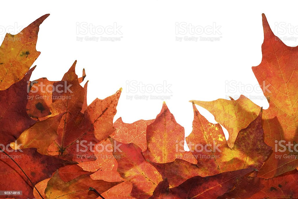 Autumn leaf border royalty-free stock photo