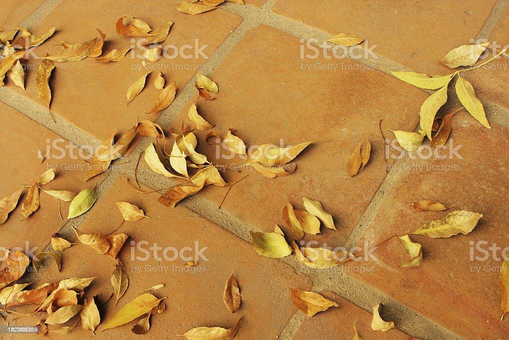 Autumn Leaf Clay Tile Floor stock photo