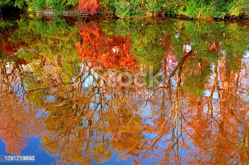 Beautiful autumn color leaf of Inokashira Park with its reflection on the lake. Some migratory birds, including ducks, can be observed.  Inogashira Park is a public park bordering Kichijoji City and Musashino City of Tokyo Prefecture.