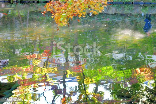 The reflection of autumn leaf color on the surface of pond with wave. This photo was taken at Otaguro Park in Tokyo. The site of Otaguro Park was originally the residence of Mr Motoo Otaguro, a music critic, but it has since been converted to a public park (free of charge) under the management of Suginami ward office of Tokyo Metropolitan government.