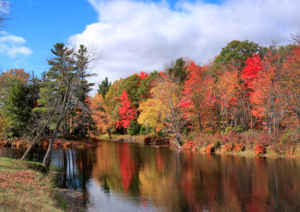 autumn leaf colors by skootamatta rive - deciduous stock pictures, royalty-free photos & images