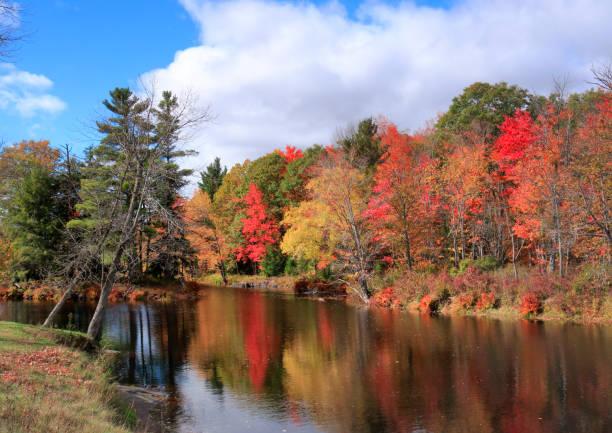 feuille d'automne couleurs par skootamatta rive - arbre à feuilles caduques photos et images de collection