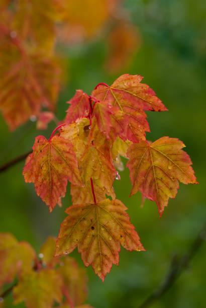 Autumn Leaf Colors stock photo
