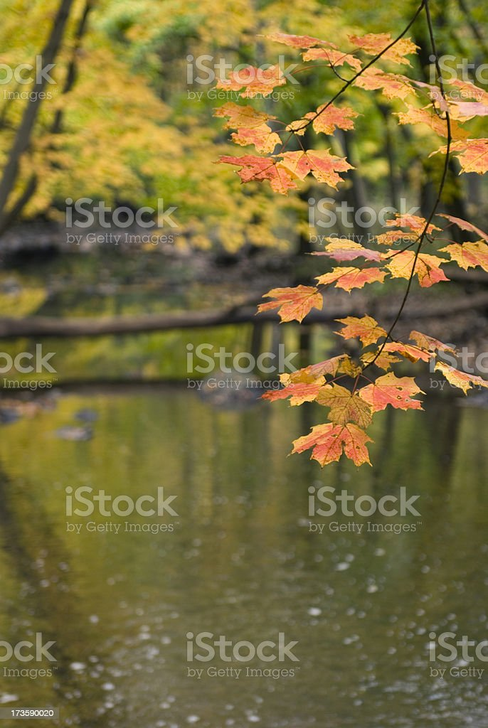 Autumn Leaf Copy Space royalty-free stock photo