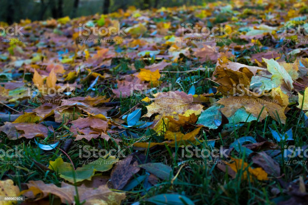 Autumn leaf fall with yellow and green leaves stock photo