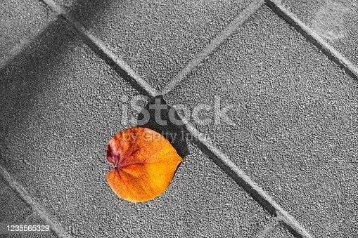 Autumn leaf falling on the floor.