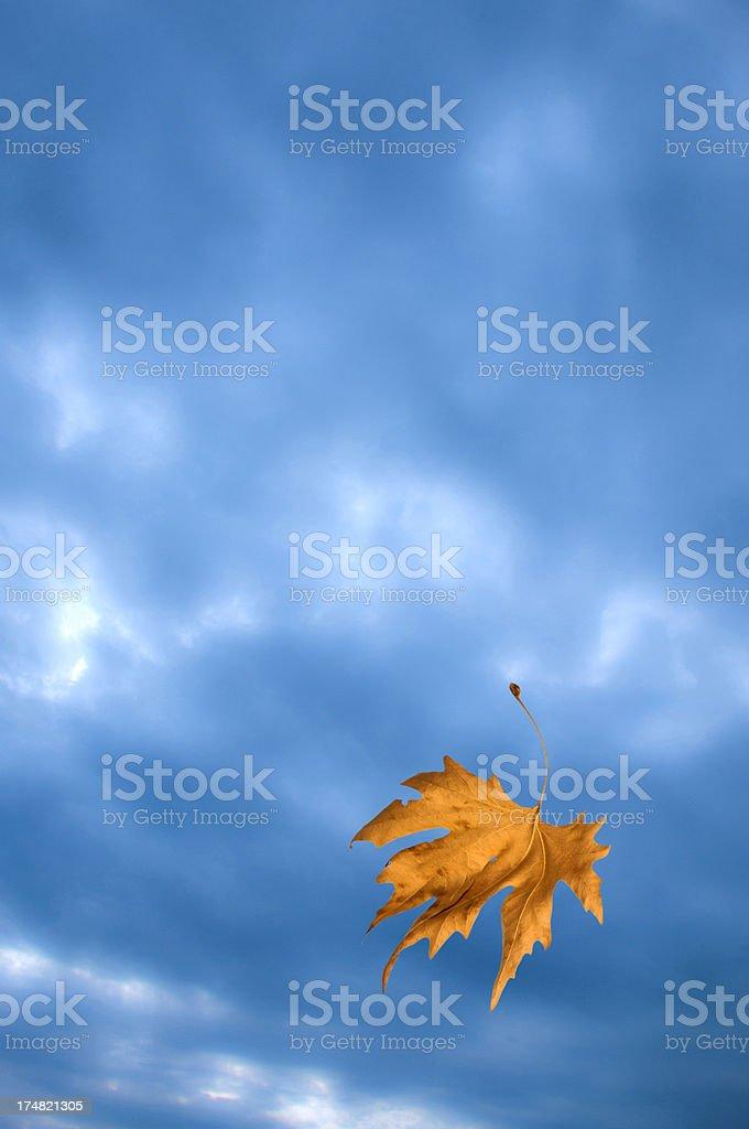 Autumn leaf falling royalty-free stock photo