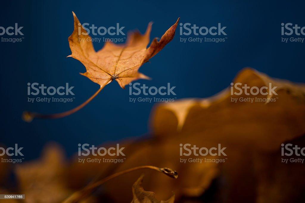 Autumn Leaf Falling stock photo