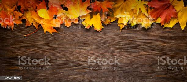 Autumn leaf frame for words and inscriptions copy space picture id1030218962?b=1&k=6&m=1030218962&s=612x612&h=xa9rzvzycsouf6jsxkztc tj622cfy9kvsbo4gidij4=