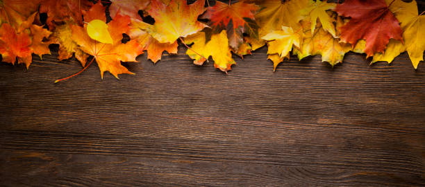 autumn leaf frame for words and inscriptions, copy space - autumn stock pictures, royalty-free photos & images