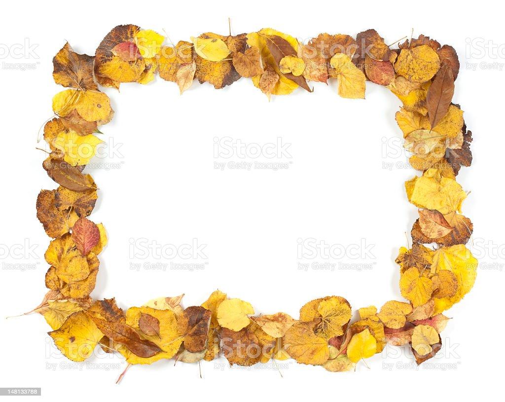 Autumn Leaf Frame stock photo
