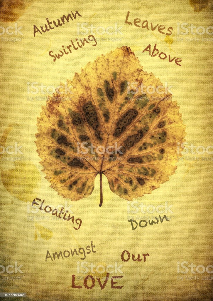 Autumn Leaf from a Linden Tree stock photo