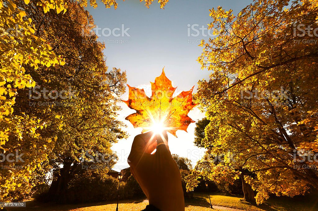 Autumn leaf in hand stock photo