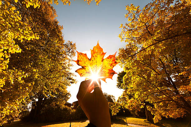 autumn leaf in hand - september stock photos and pictures