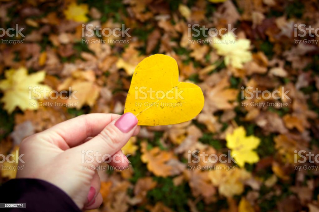 Autumn leaf in hands in the form of heart. stock photo