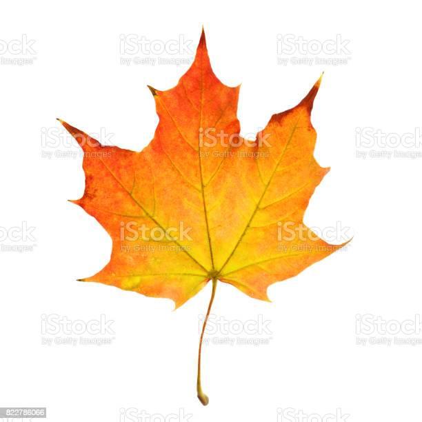 Photo of Autumn Leaf Isolated on White Background