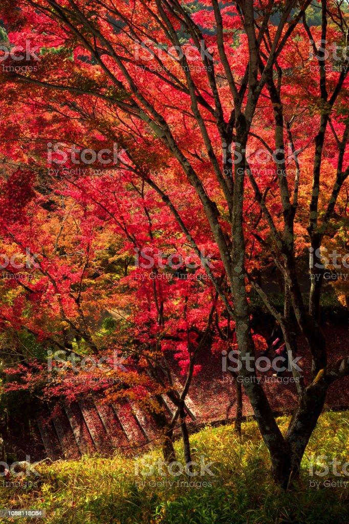 Herbstlandschaft Blatt, Kyoto, Japan – Foto