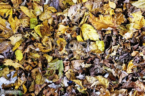 Fallen leaves are starting to decompose.