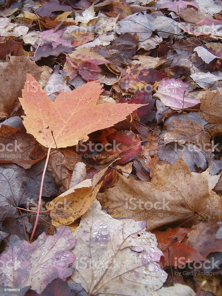 Autumn Leaf Litter royalty-free stock photo