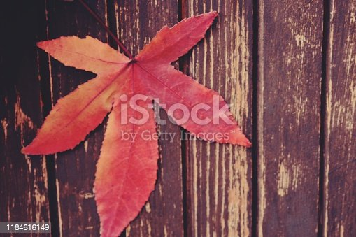 677933036 istock photo Autumn leaf on a wooden background 1184616149