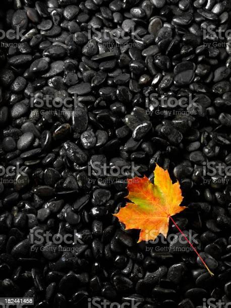 Photo of Autumn Leaf on Black Pebbles