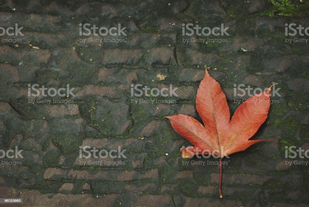 Autumn Leaf on dark brick - Royalty-free Autumn Stock Photo