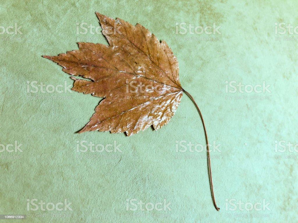 Sonbahar yaprak yeşil stok fotoğrafı