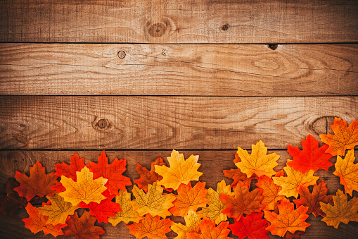 Autumn maple leaves over old wooden background with copy space. border frame design.