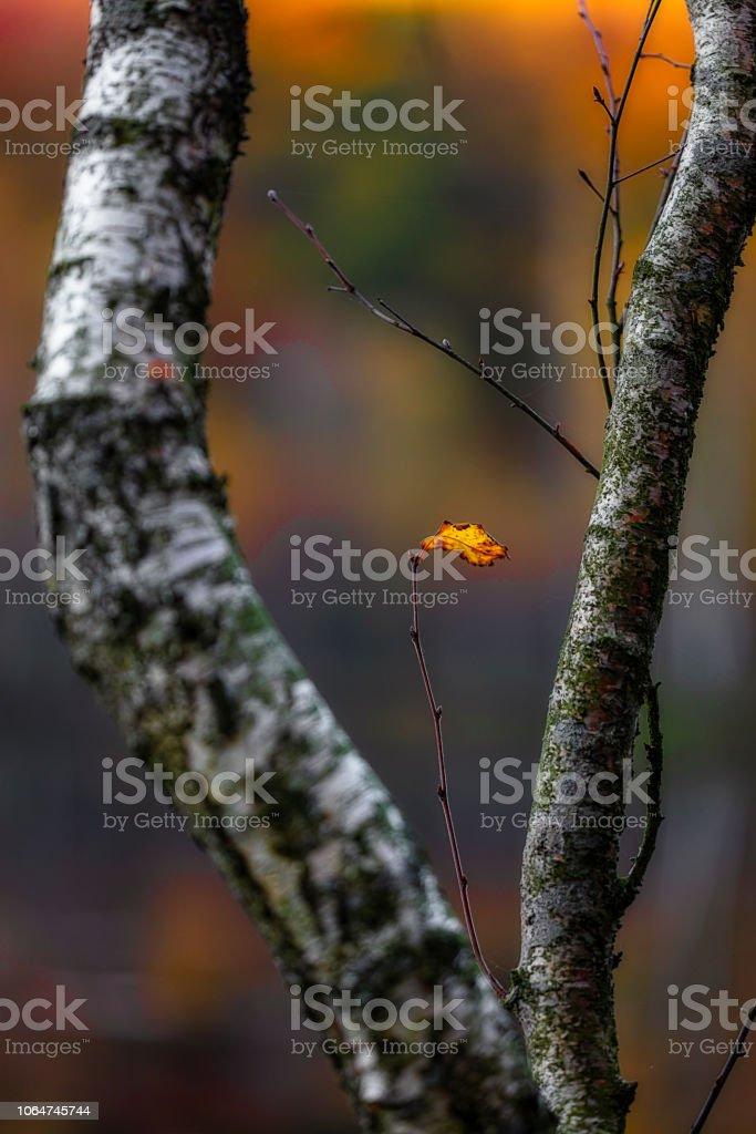 Höst löv bildbanksfoto