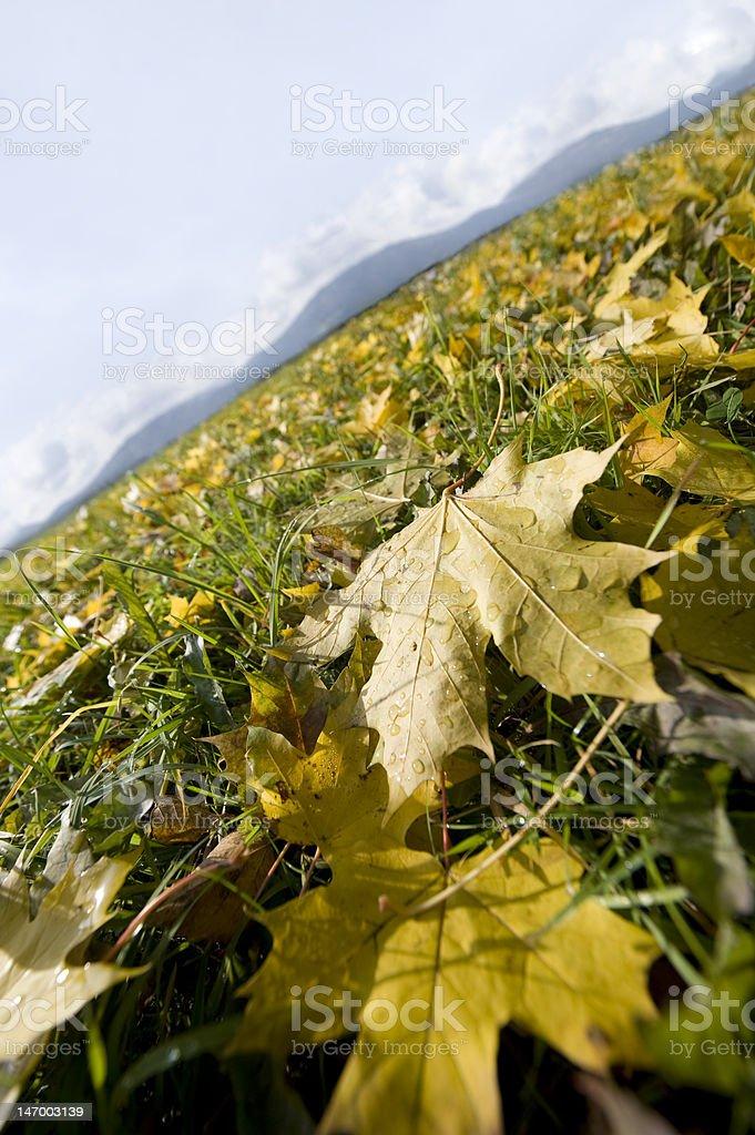Herbst Blatt – Foto
