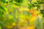 秋のリーフ
