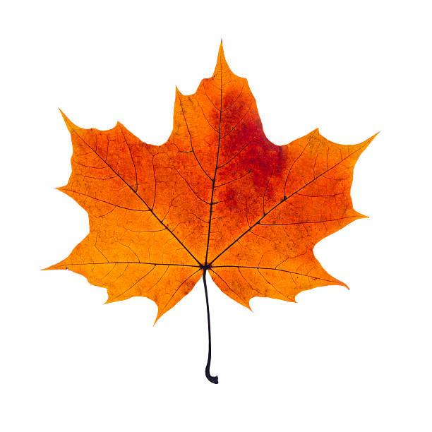 Resultado de imagen para autumn leave