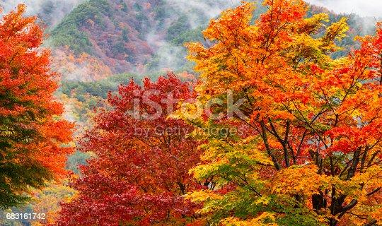 Autumn Leaf Japan