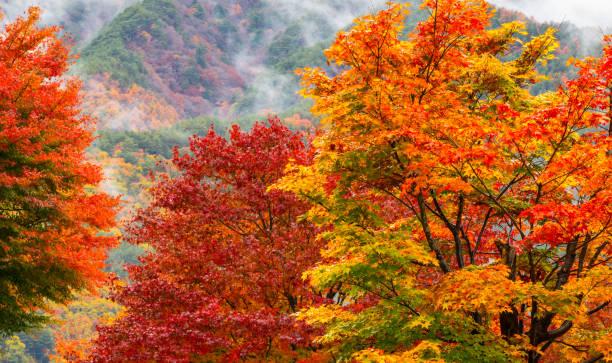 feuille d'automne  - feuillage automnal photos et images de collection