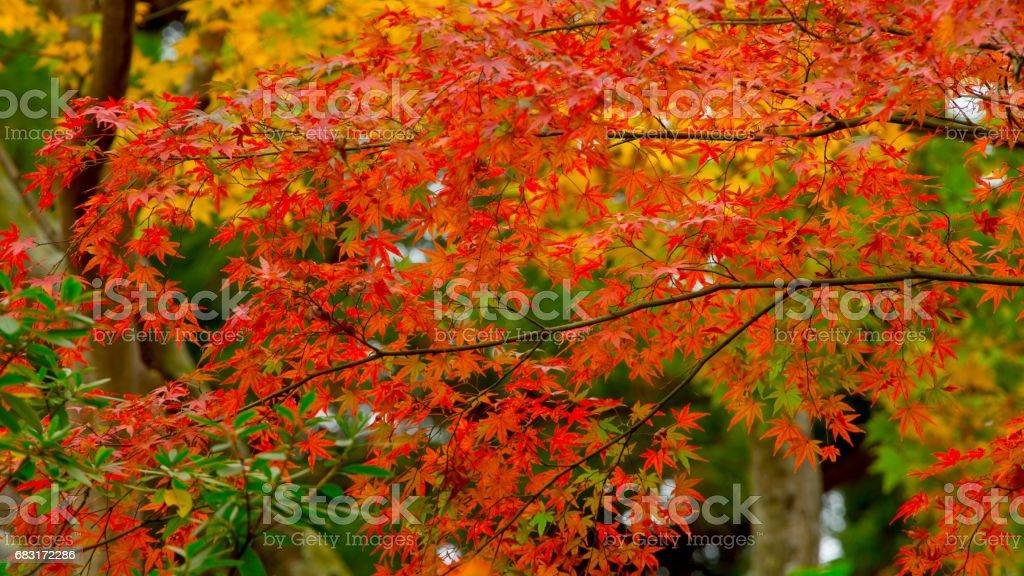 추절 잎  royalty-free 스톡 사진