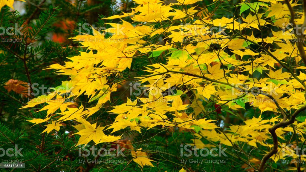 Autumn Leaf foto de stock royalty-free