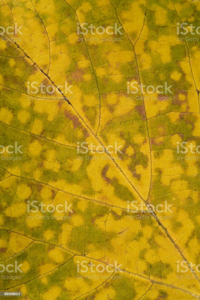Autumn leaf royalty free stockfoto