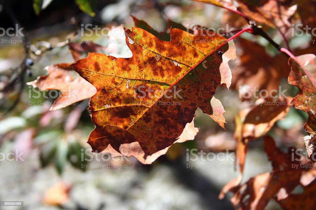 Jesień Liść zbiór zdjęć royalty-free