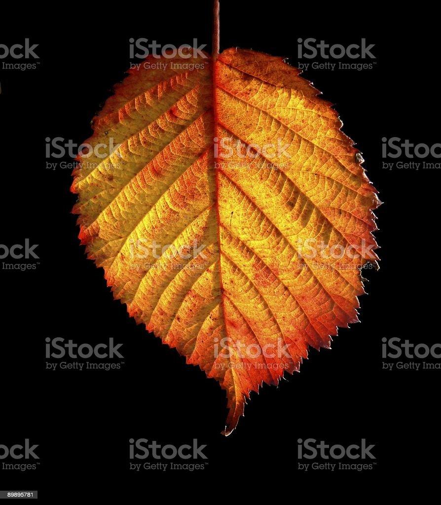 Herbst Blatt Lizenzfreies stock-foto