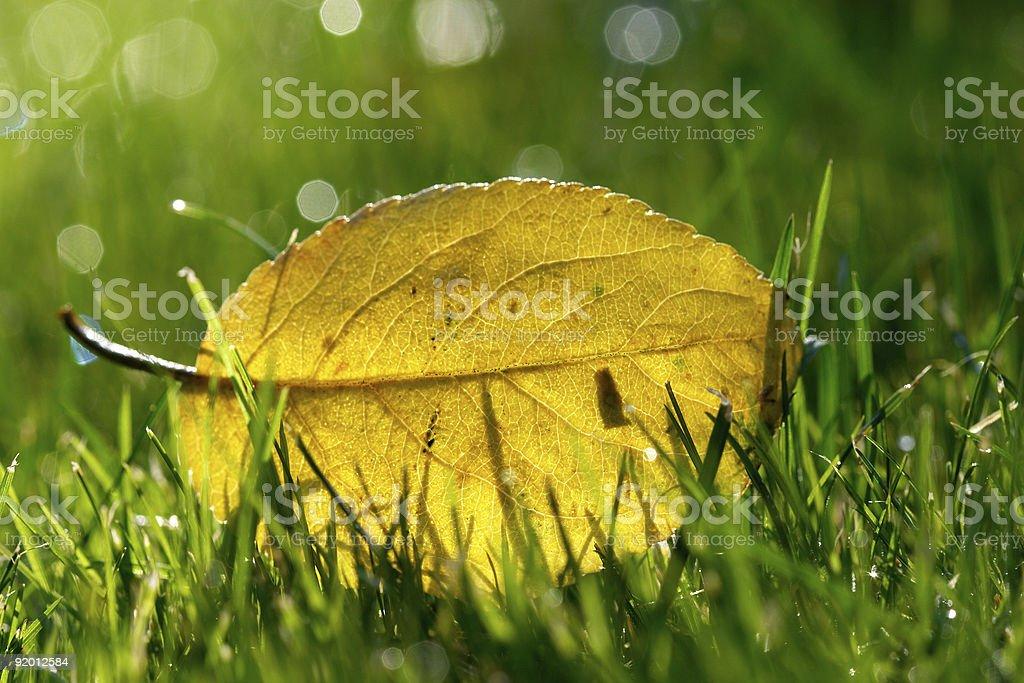 autumn leaf royalty-free stock photo